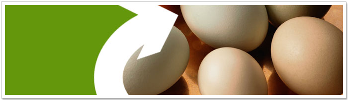 Egg shells can be re-used